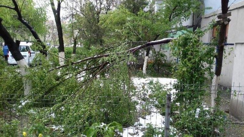 copaci cazuti galati2