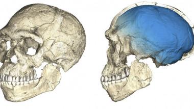 Homo-sapiens-1170x614