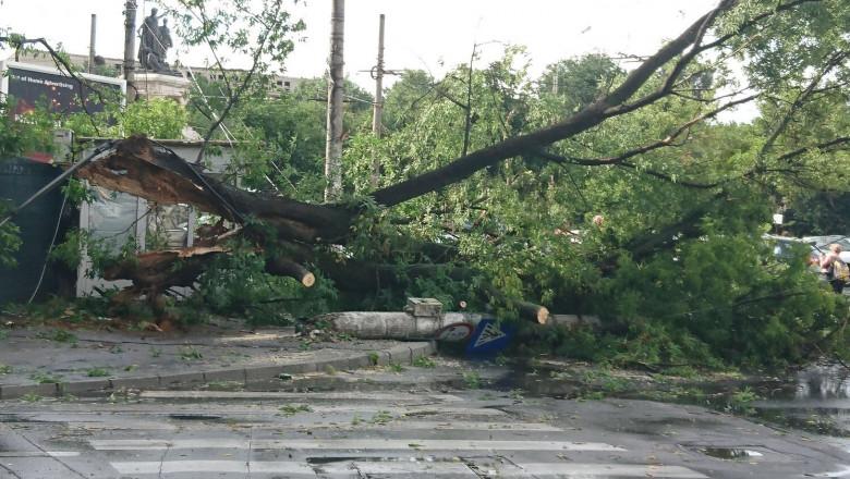 copac cazut Eroilor, str Elefterie 6 170617