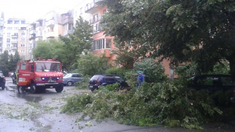 furtuna Baia Mare