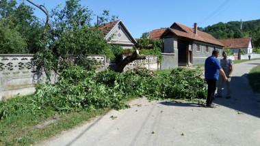 urmari furtuna gradini (11)