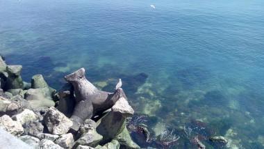 mare litoral