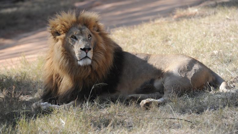 German National Football Team Visits Lion Park