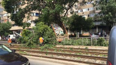 copac cazut pe linia de tramvai Rahova 1 250717