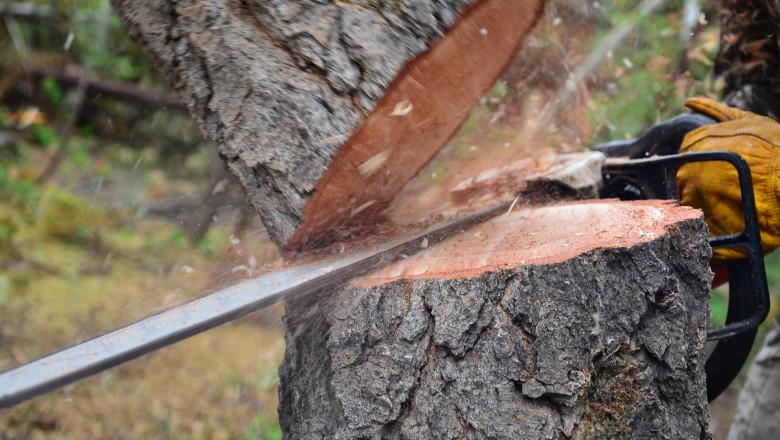 pom taiat defrisare padure lemn shutterstock_115907512