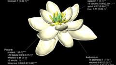 stramosul florilor