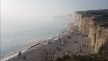 ceata toxica plaja