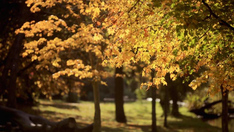 Autumn Colours Begin To Show