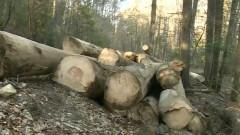 paduri taiate lemn