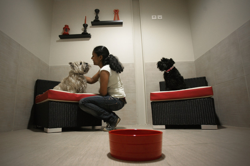 'Actuel Dogs' - Luxury Dogs Hotel Visit