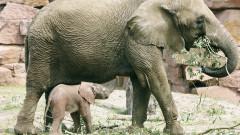 elefant gradina zoo