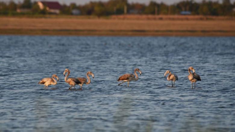 Flamingo+Ialomita_800x520