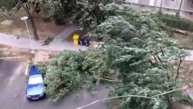 furtuna timisoara2