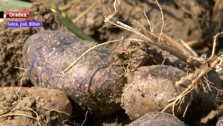 cartoful mov
