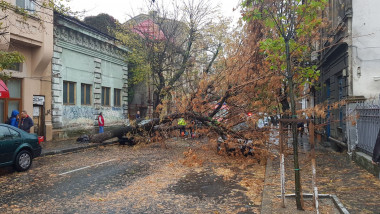 copac cazut Popa Tatu 2 241017