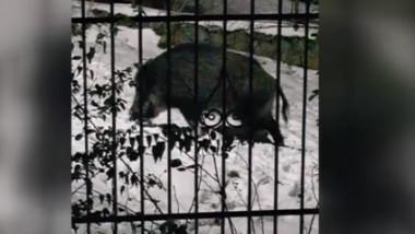mistretul la gard