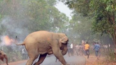 elefanti flacari