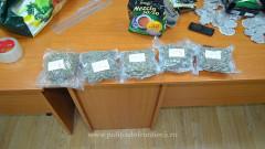 drog canabis frontiera (1)