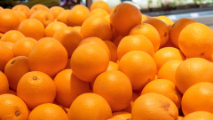 portocale citrice shutterstock_488586178