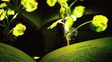 lumina-plante