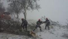 copaci cazuti Babadag ISU 2 180118