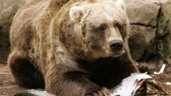 Kodiak Bears Birthday Milestone