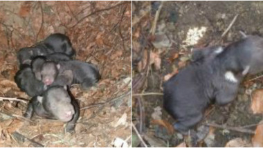 ursoaica-cinci-ursi