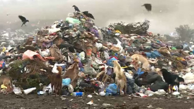 gropa de gunoi