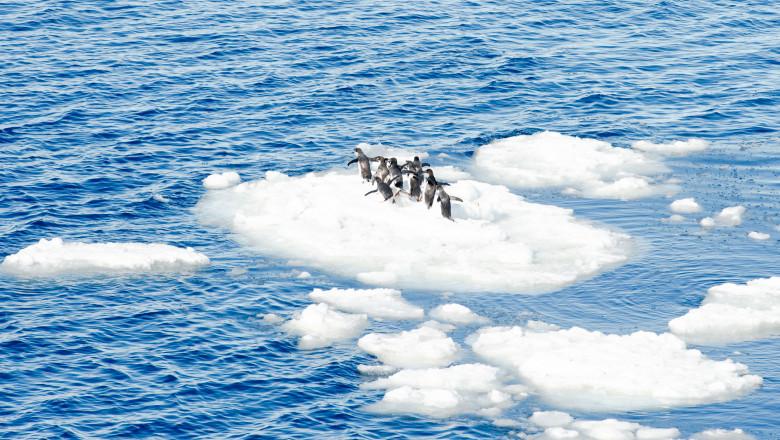 ocean incalzire pinguini clima
