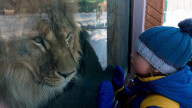 Copil zoo leu