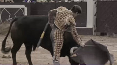 matador taur