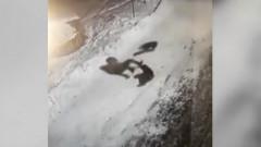 femeie atacata caini