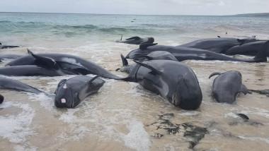 balene esuate australia