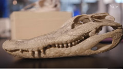 reptila craniu triasic