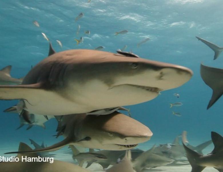 rechini.jpg