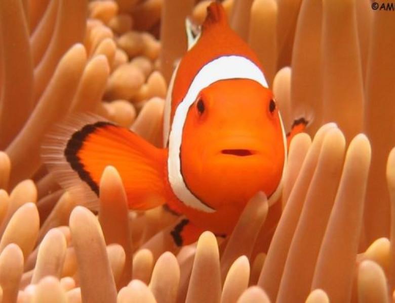 fish-life.jpg