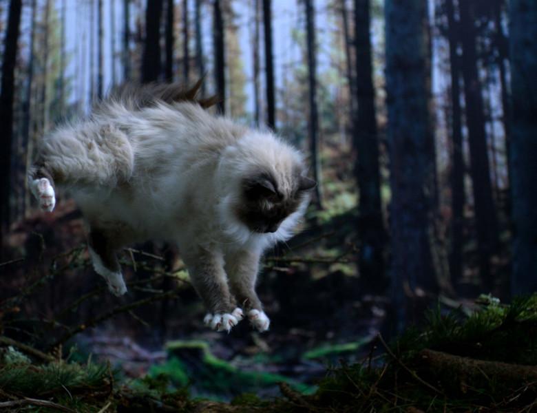 pisica-21.jpg