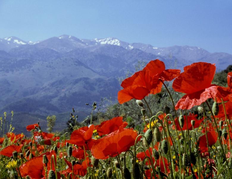 Greece-Scenic-1312.jpg