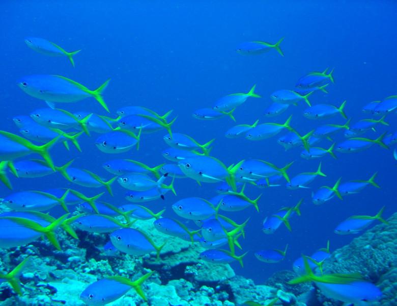 UW_school-of-fish.jpg