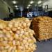cartofi cartofi in sac depozit shutterstock_569242276