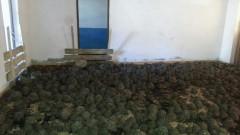 Țestoase