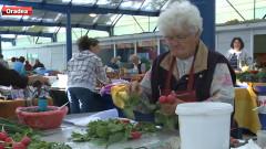 producatori legume