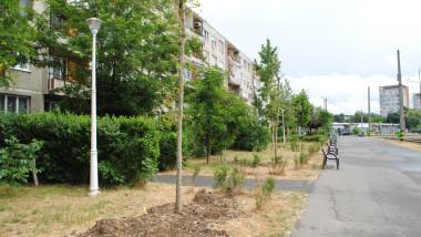 arbori plantati Oradea (1)