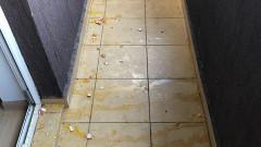 birou parlamentar cornel zainea usr chiajna atacat cu oua (5)