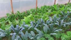 legume bio ferma