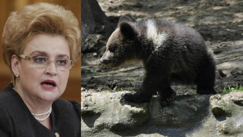 gavrilescu ursi