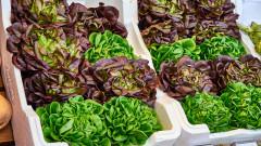salata shutterstock_1097285888