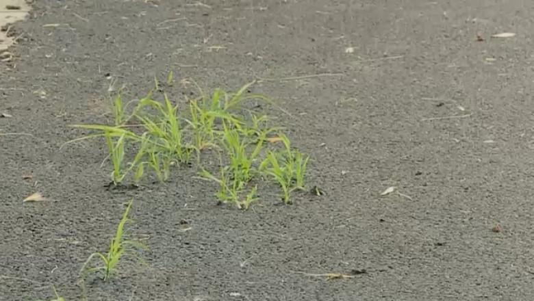asfalt verde