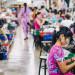 muncitori asia
