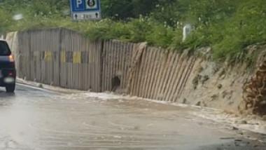 dn1 aluviuni